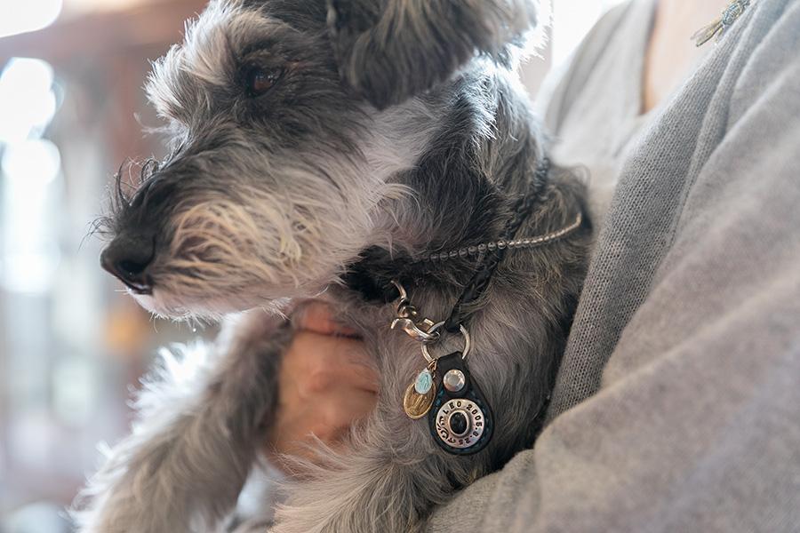 愛犬レオちゃんの首元には水晶を加工したブレスレットとパリの有名な聖地「奇跡のメダイ教会」のメダルが。