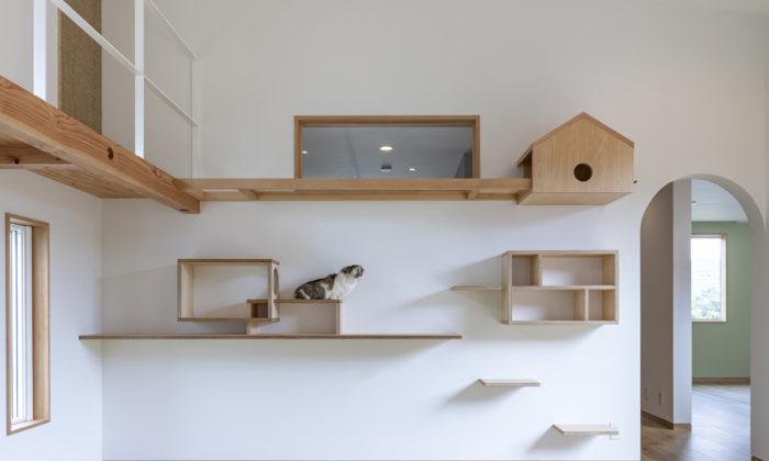猫好き建築家が提案人もペットも幸せになる猫と暮らすアイデア