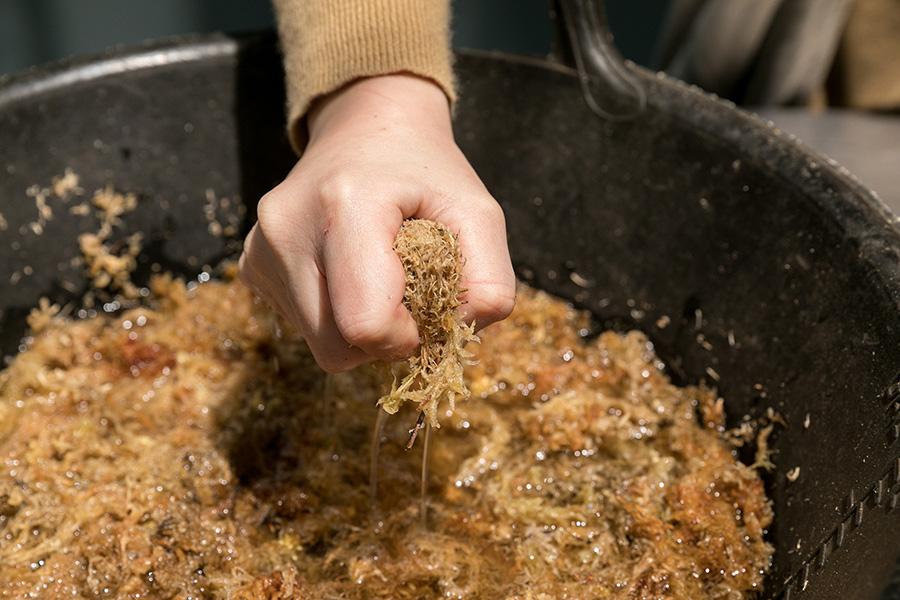 たっぷりと水を含ませた水苔をギュッと絞ってから使用する。