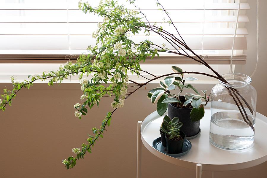 窓辺には、腰の高さにコデマリや多肉植物などのグリーンをあしらって。