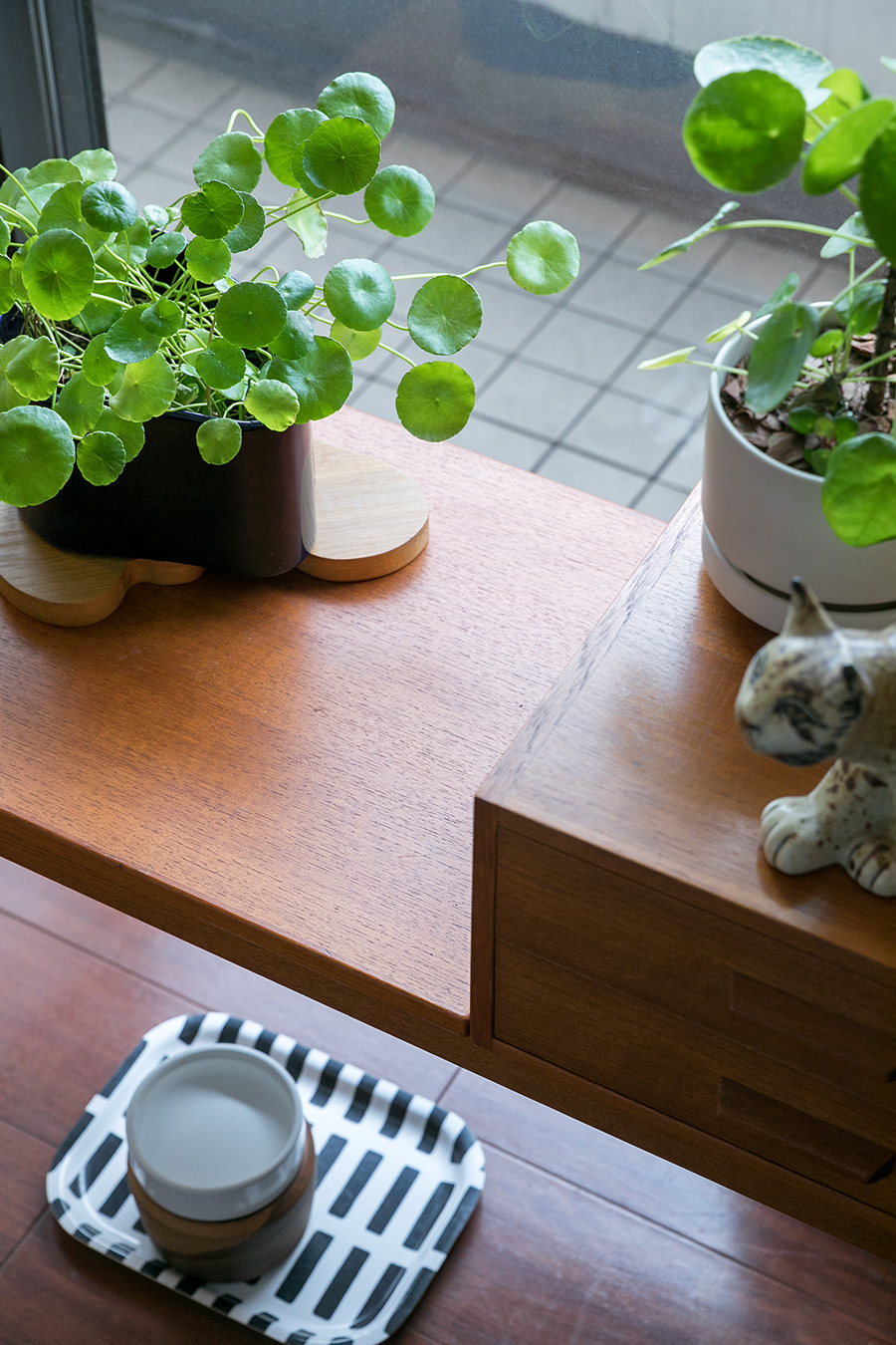 アルテックのプラントポットにウォーターマッシュルームを飾って。床のサイファーちゃんの水飲みは木製の器に入れて少し高くしてある。