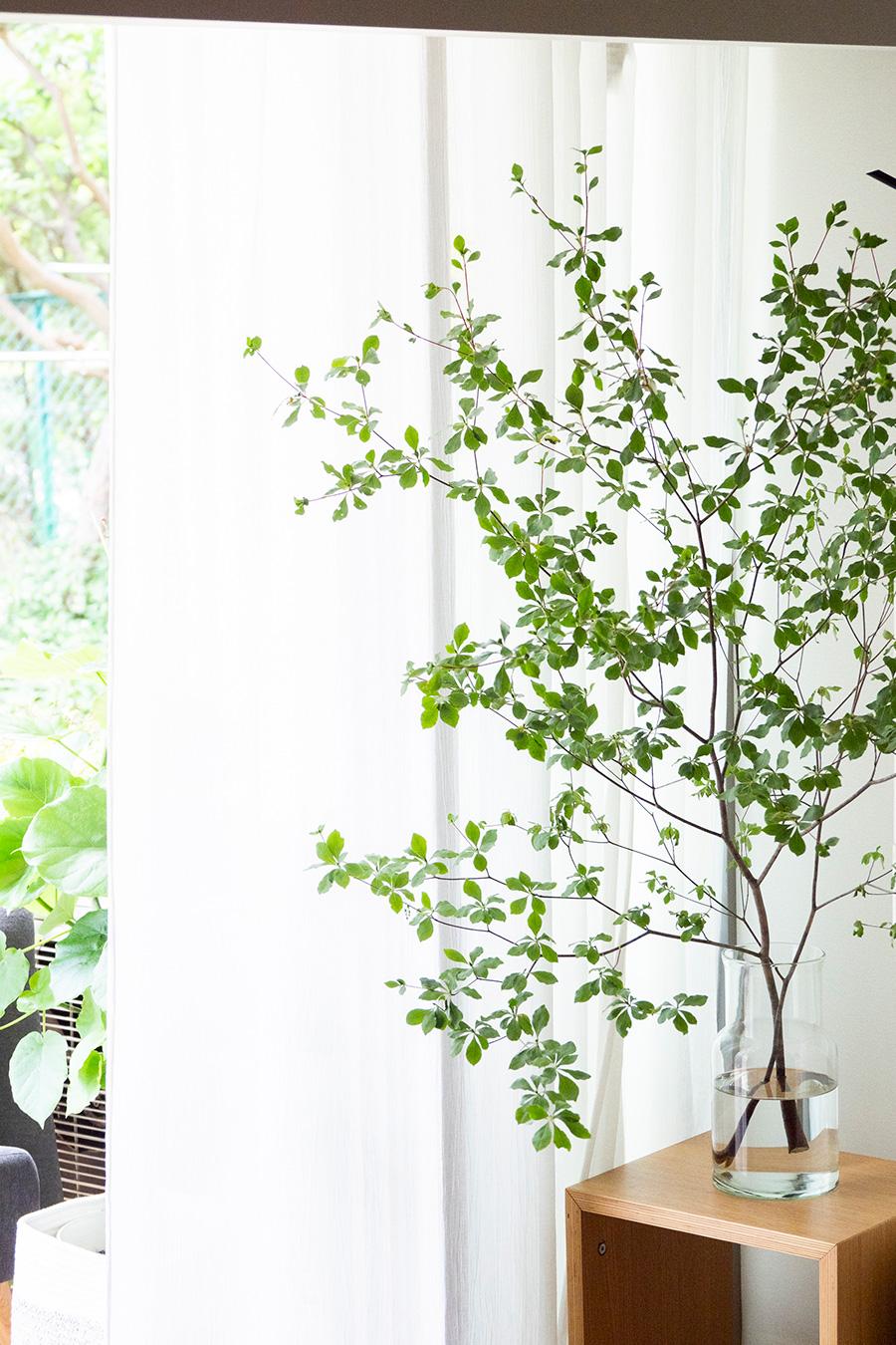 室内にも常にグリーンを。この時期はドウダンツツジを欠かさない。