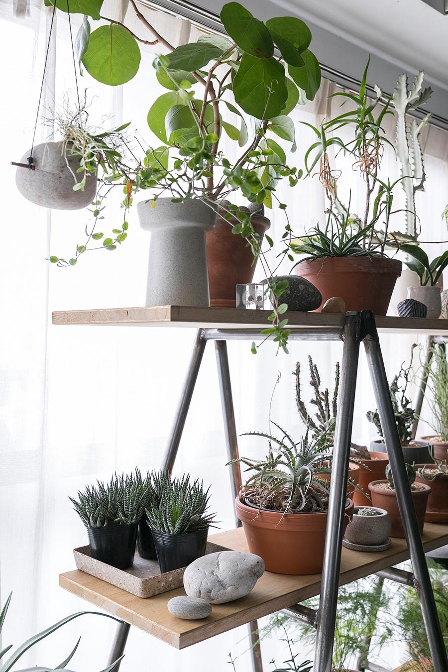 植物にハマっているという健さん。棚は三脚に板を渡したもの。「三脚は工事現場で使われているものです。Tokosieを見て買いました」。蘭や多肉植物など、種類にはこだわらず気に入ったものを育てている。鉢はテラコッタに統一すべく植え替え中。