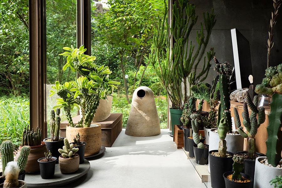 庭に面した日当りのいいリビングの一角で、サボテンや多肉植物を育てている。中央は絵里加さんの作品。