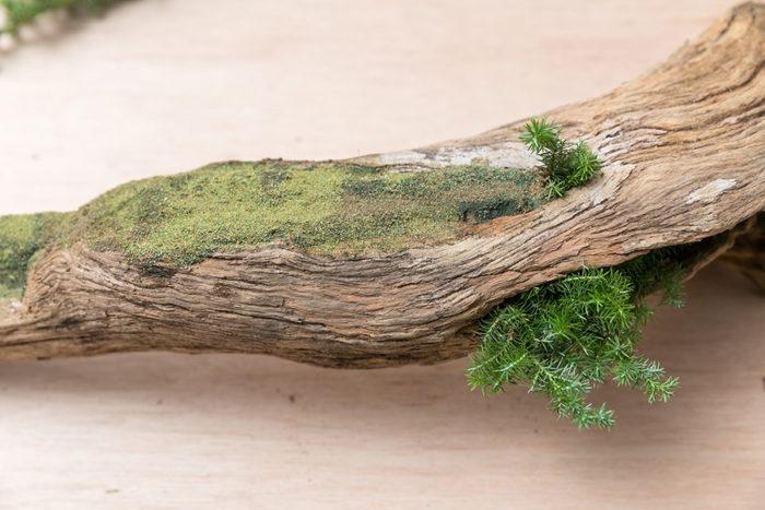 3色のパウダーでベースが完成。「濃い色の上に薄い色を重ねる手法は、いけばなでも奥行き感を出すために使われるテクニックです」。朽木の穴をカバーするために挿したのはヒムロスギ。