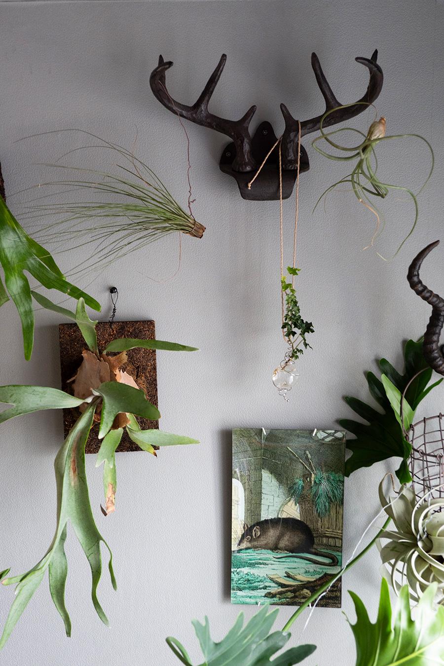 コウモリランなどが美しいグリーンの壁。STEFANO POLETTIの植物を活けられるペンダントや、JOHN DERIANのデコパージュをアレンジしている。