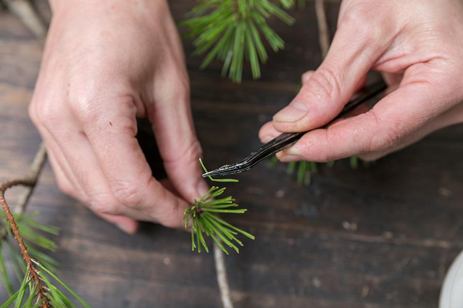 拭いた後に傷んだ葉を抜く。この一手間が仕上がりの美しさを左右する。