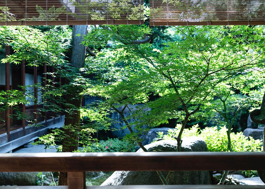 奈良町店では美しい日本庭園を眺めながら美味しいお茶をいただける。