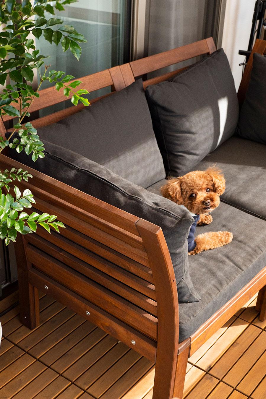 愛犬・トイプードルのツンくん。暖かな日向 が大好き。