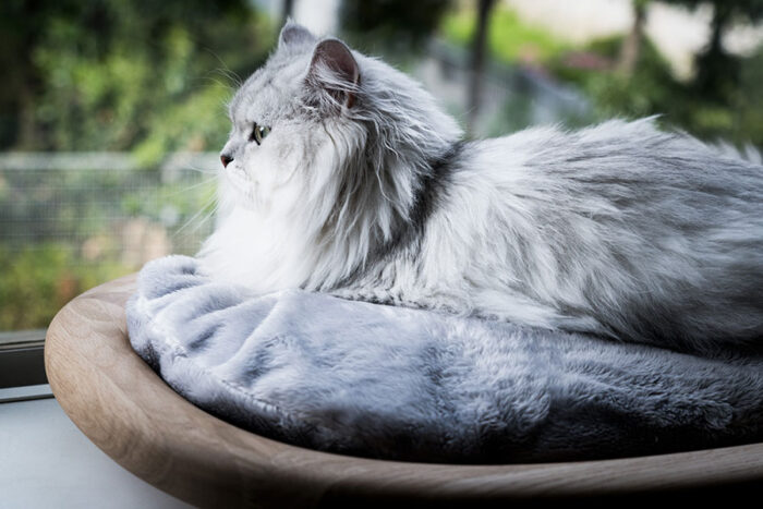 『KARIMOKU CAT BED』を出窓に置けば、猫のための特等席になる。