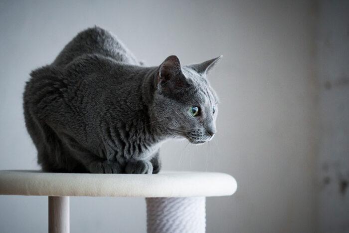 猫は高いところが大好き。最上段はファブリックが張られている。