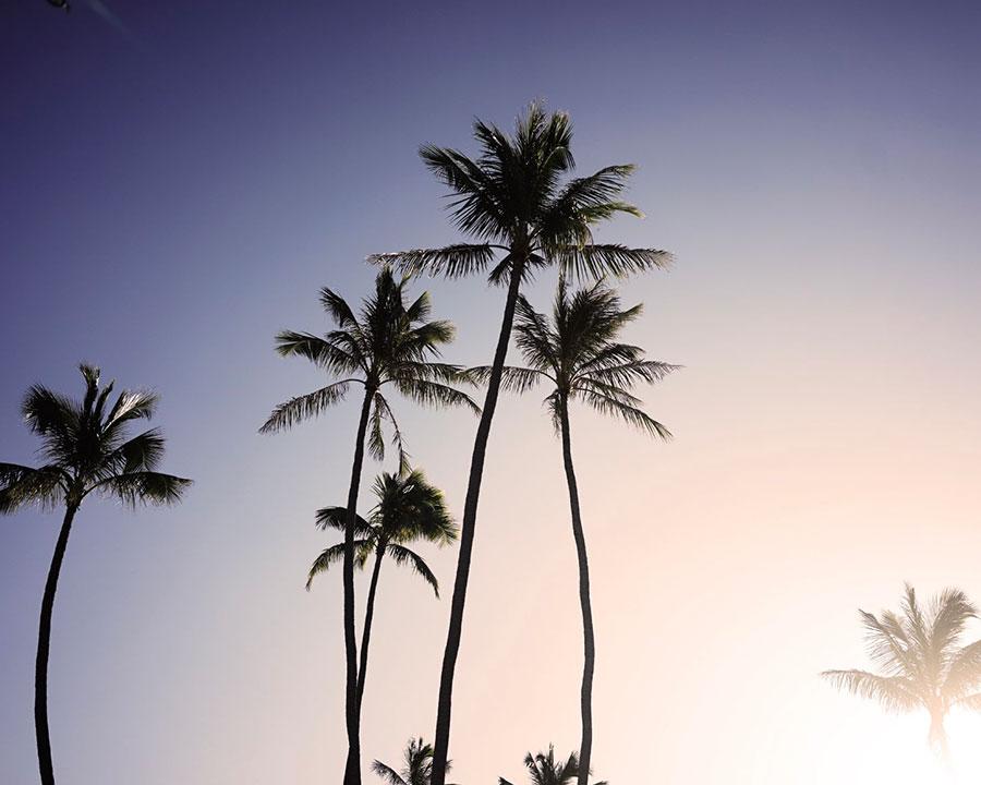カリフォルニアラブ 独特の甘味の中にフルーツが混ざりあったカジュアルな香り。目を閉じると美しい海辺の景観が浮かぶよう。