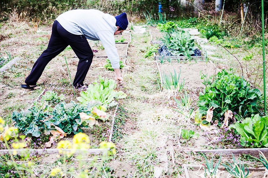 割当てられた区画では、自由に好きな作物を栽培できる。区画外では春先にはフキノトウ、ワサビナなどが生え、自由に収穫できる。