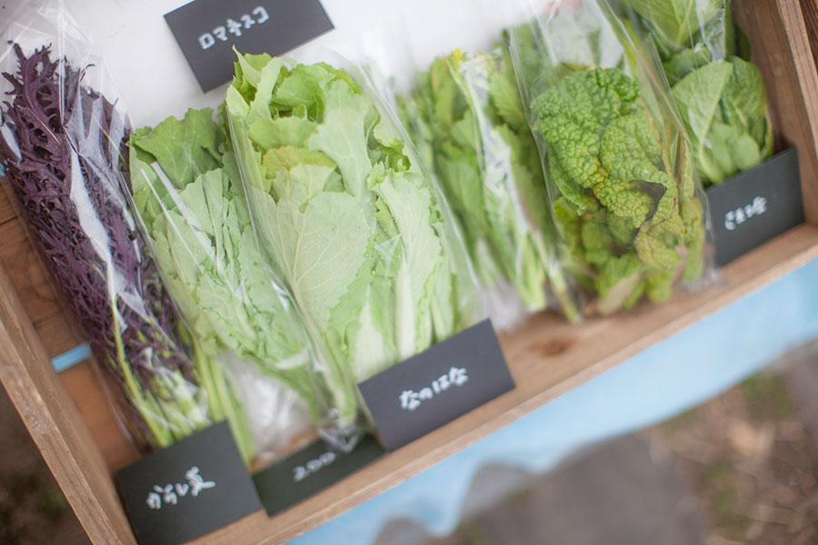 無農薬で安心安全なおいしさ。「MAMI&CO.FARM」の野菜たち。