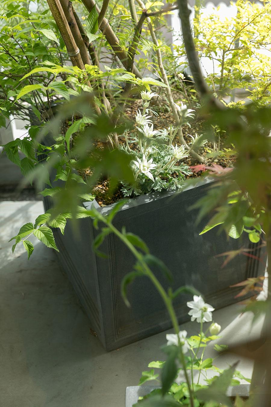 バルコニーの植栽も『ヒトクサ』で。「鉢は合成樹脂製です。石に見えますよね? ビックリしました。足元に植えたオダマキが、春になって少し場所を移動して出てくるのが愛おしいです」
