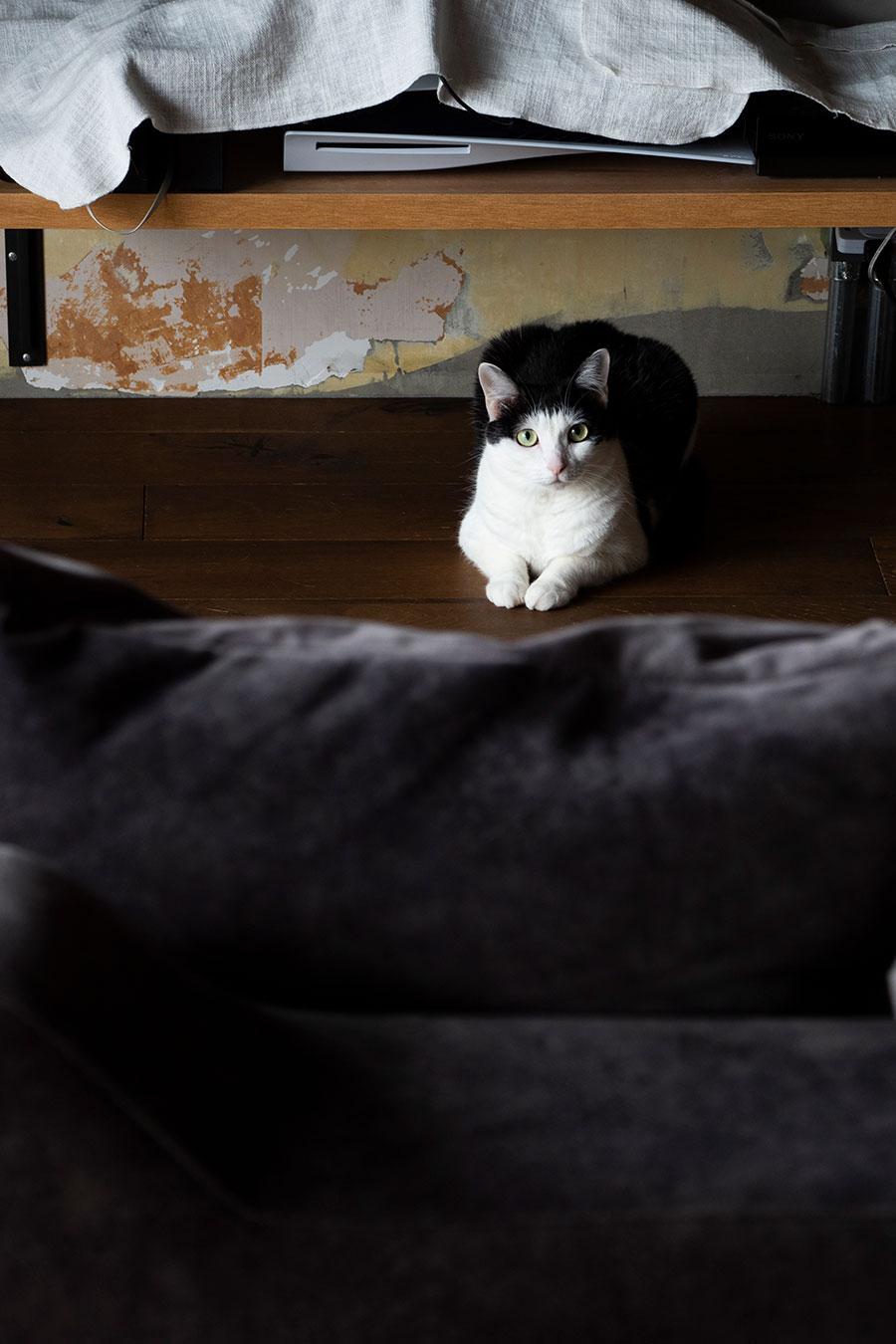 子猫の頃に沖縄で遭遇。飛行機で東京に連れて帰ったういちゃん。