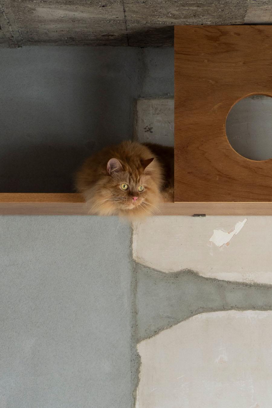 保護猫だったおんちゃん。ういちゃんのお友達として招かれた。