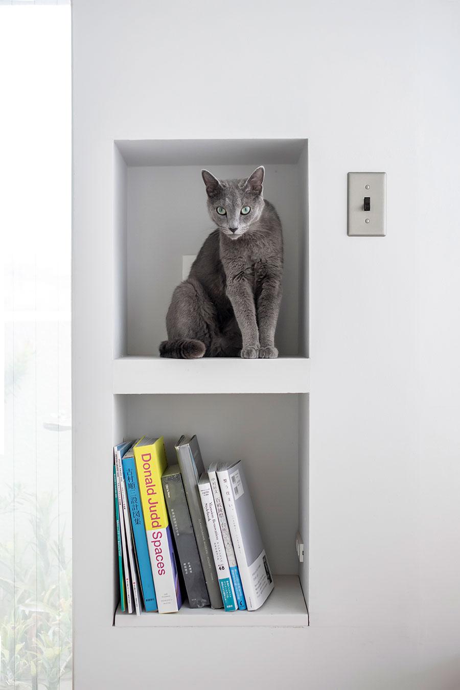 壁の厚みを活用したニッチ棚。上段には愛猫のコチ2歳。