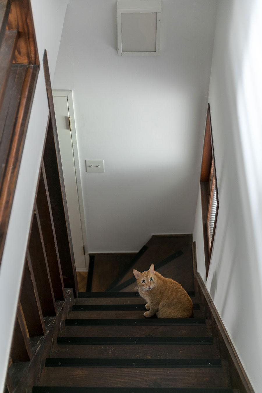トイレに入ると、正面の窓に明かりが灯る。「斜め上の位置どりが面白いですよね」(Harunaさん)。