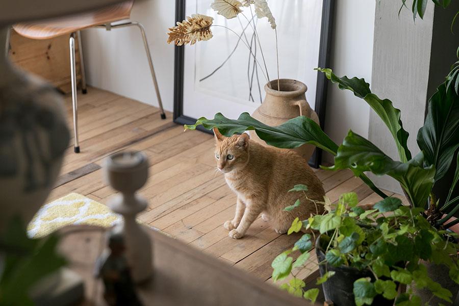 こちらは本物の猫のにゃん坊。遊び場所に事欠かないこの家で、悠々自適に暮らす。