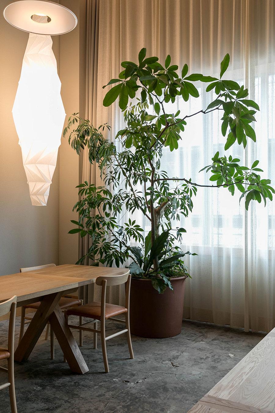 スイートルームのパキラとシェフレラ、モンステラの寄せ植え。「珍しい植物を使わなくても、組み合わせと樹形の選択でカッコよくなります。いろいろな角度から見られる場所にある鉢なので、どこから見てもいいように造りました」。葉は光に向かって伸びる性質があるので、時々鉢を回してバランスを整えている。