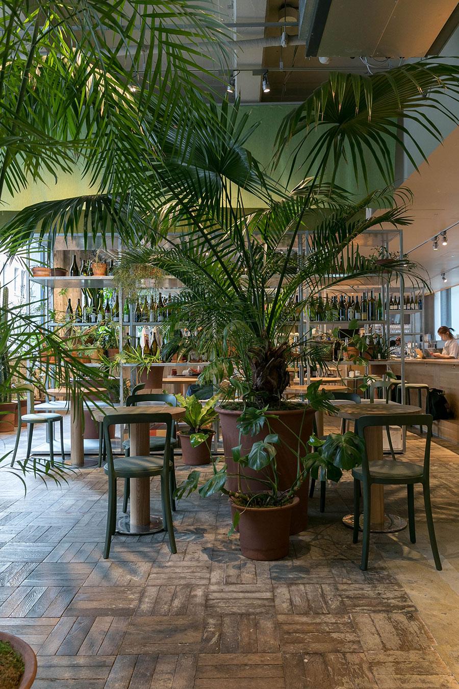 コーヒーショップのエントランスを入って真っ先に出迎えてくれるグリーン。「インパクト重視で葉が大きく広がる植物を選びました」。ビロウヤシの足元はモンステラ。
