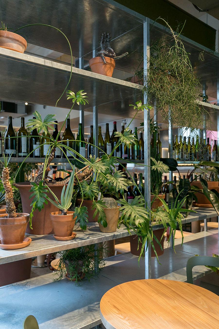 コーヒーショップとワインバーは棚でゆるやかに仕切られる。棚の上には葉が垂れるものを飾る。「鉢の配置は時々変わるので、楽しんでいただければと思います」