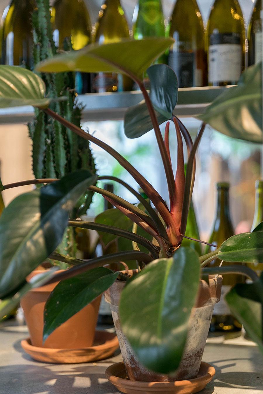 茎の赤が目を引く。植物の選択は姿形の他、色もポイントになる。