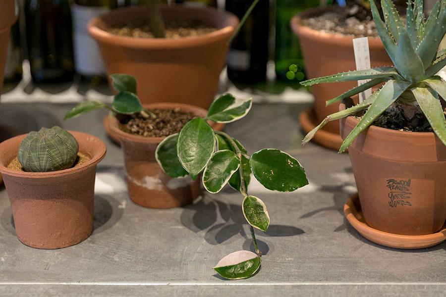 白い斑入りの植物は、空間に涼やかさを加える。
